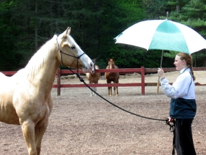 Horse Desensitizing