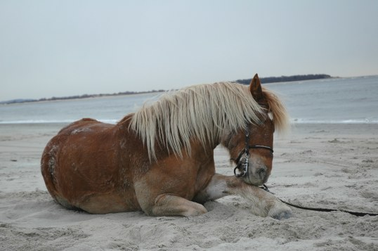 Horse Rolling at the Beach