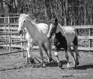Both girls trotting around in harmony. Photo by Waxler Imagery.