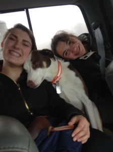 Katie, Zoe, and Jon's dog Curtis in the truck. Do you notice how much Curtis matches our mare's colors?