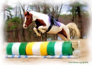 Lunging Rocío over jumps. We won't go higher than this for a long time and keep jump sessions infrequent.