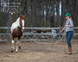 Lunging for respect is a great exercise but makes them go in many small circles. Photo by Karen Morang.